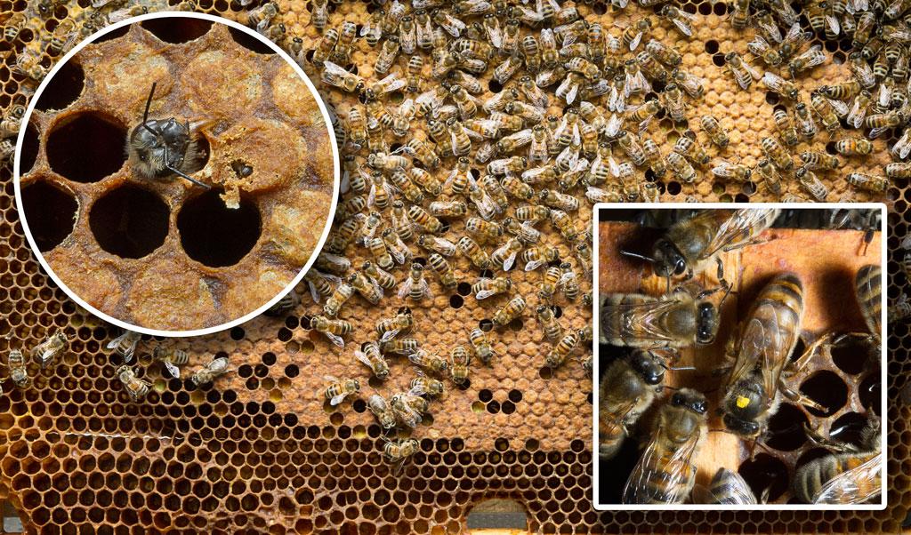 bijen1